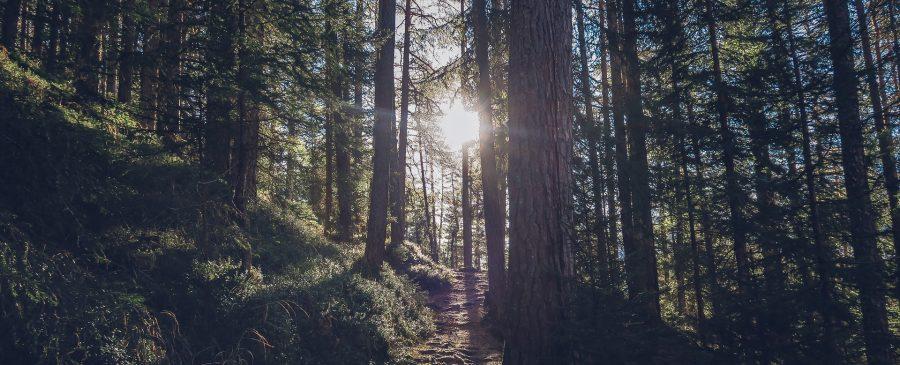 Ängste überwinden - Sommerwald
