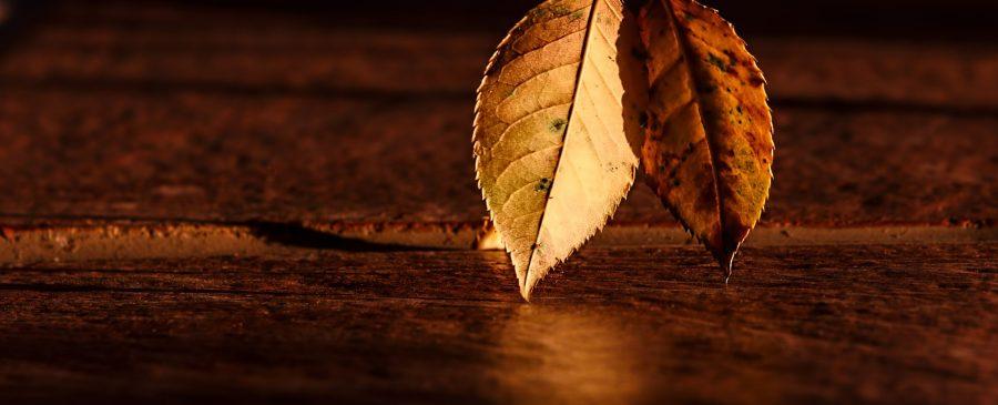 Ängste überwinden - 2 Blätter vor Holz