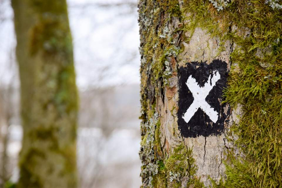 Ziele setzen - Weißes Zielkreuz auf Baum