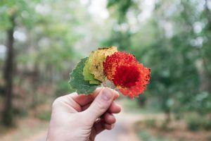 Wer bin ich wirklich - Herbstlaub in einer Hand